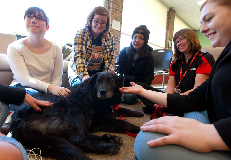 Therapy dogs visit Booth University College
